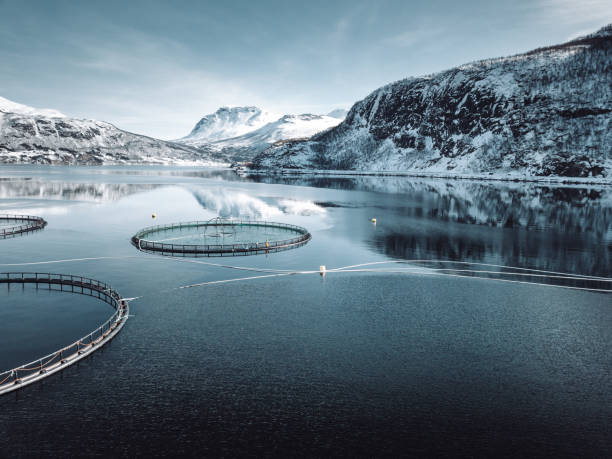 fish farm in Norway fish farm in Norway norwegian culture stock pictures, royalty-free photos & images