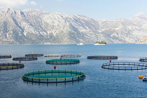 Criadero de pescado en la bahía de Kotor - foto de stock