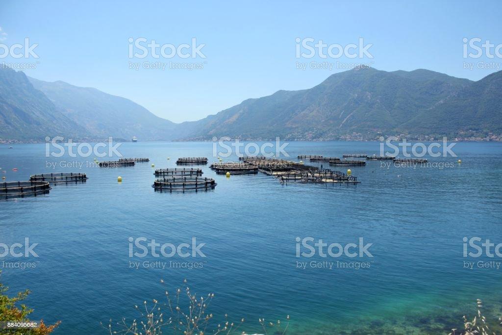 Fish farm, Montenegro stock photo