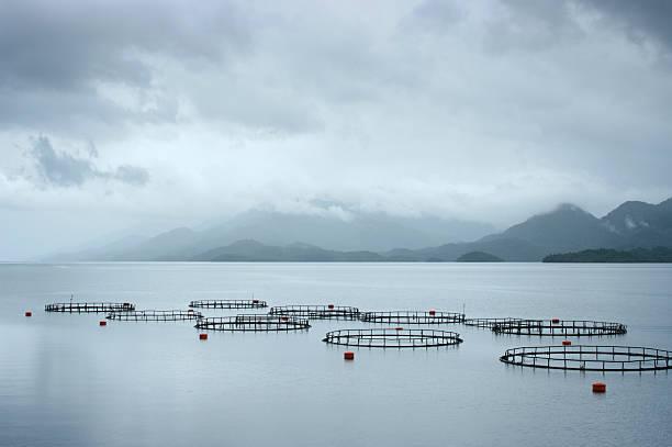 Criadero de pescado - foto de stock