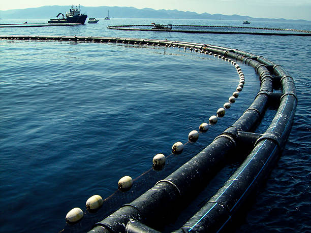 fish farm - aquaculture stock pictures, royalty-free photos & images