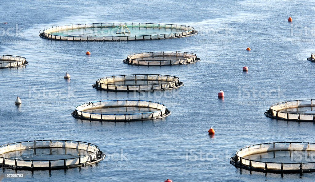 fish farm stock photo