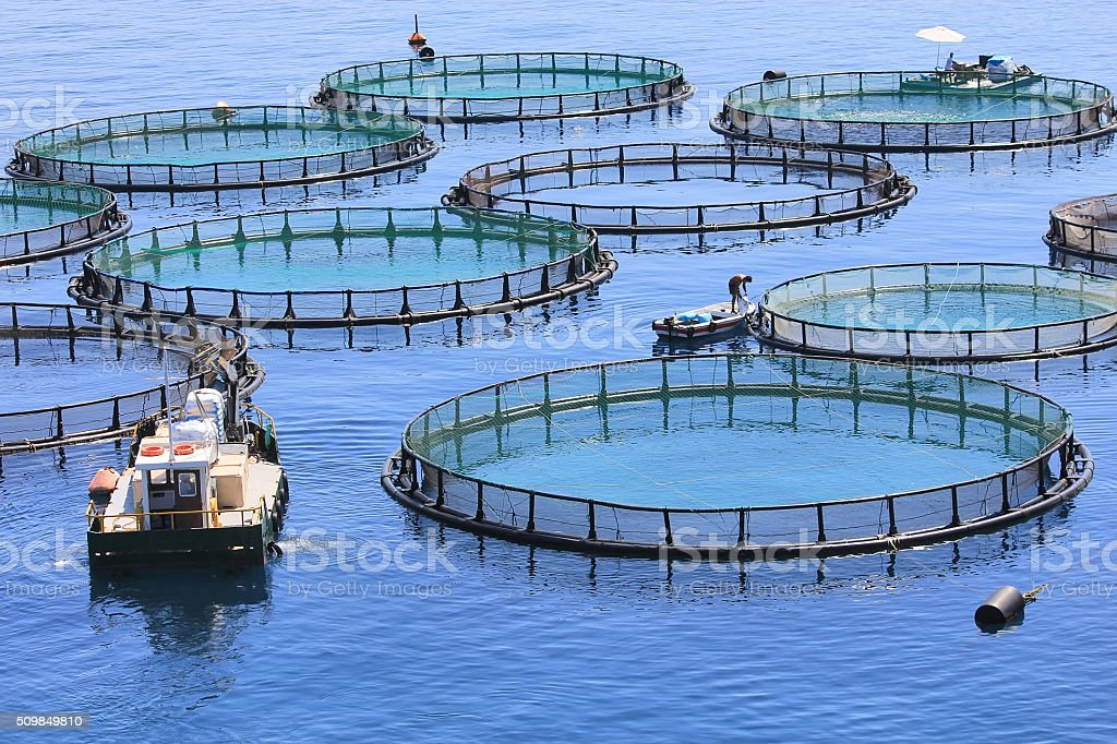 Fish farm royalty-free stock photo