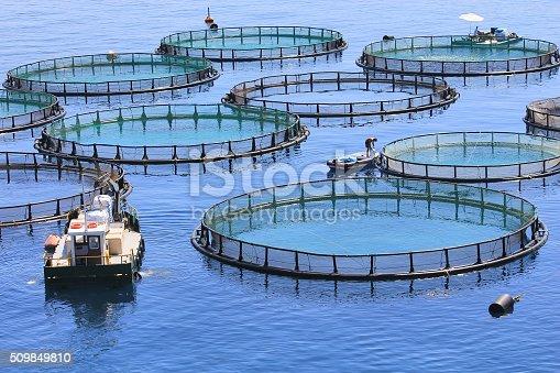 istock Fish farm 509849810