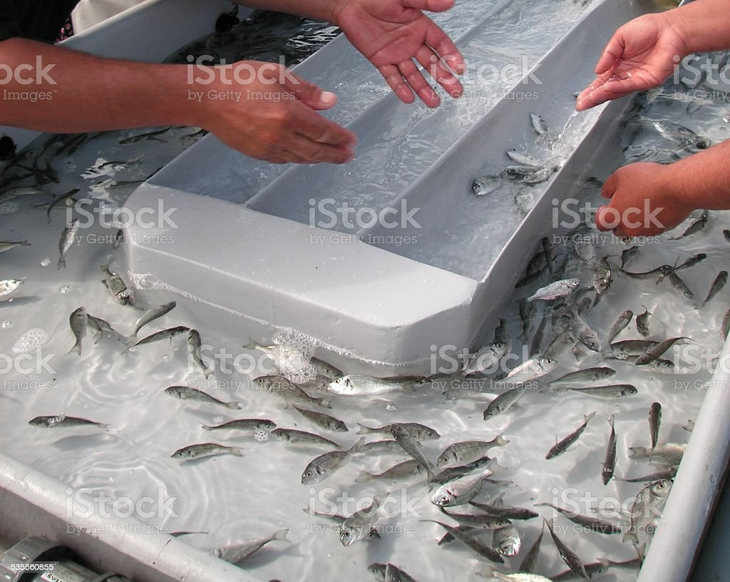 Fish farm processing stock photo