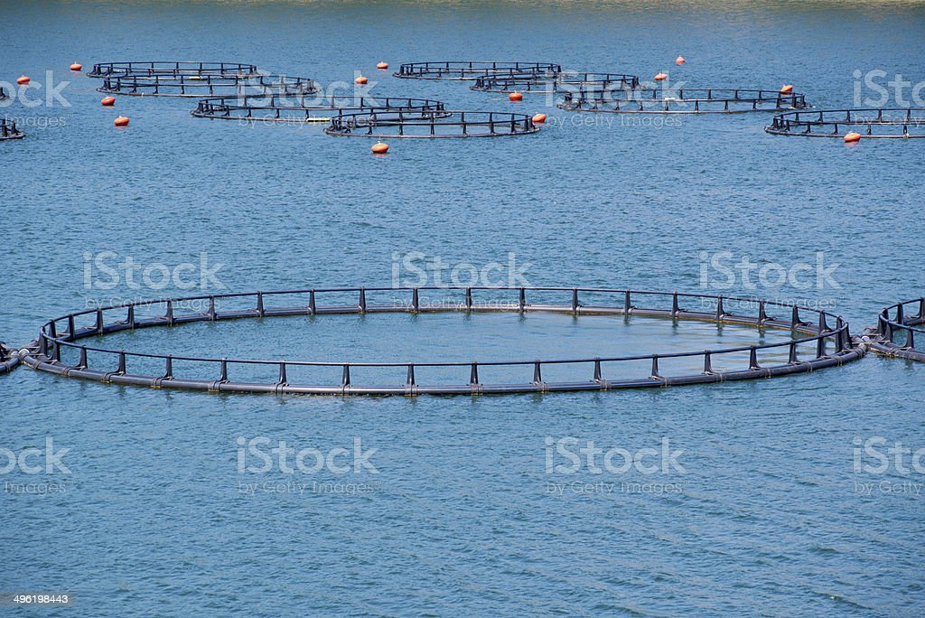 Fish Farm with floating cages stock photo
