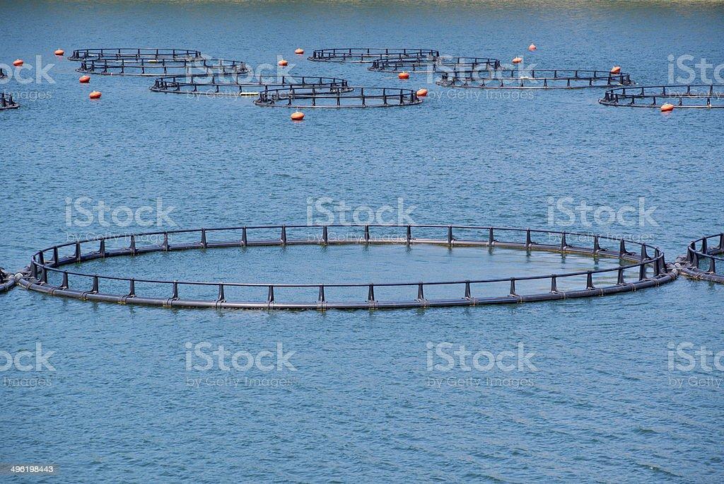 Ferme piscicole avec flottant de cages d'armature - Photo