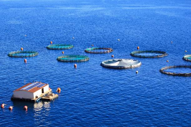 Ferme de poisson avec des cages flottantes de cercle - Photo