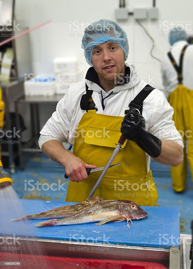 Fish filleter prepares to cut up fresh Red Gurnard royalty-free stock photo