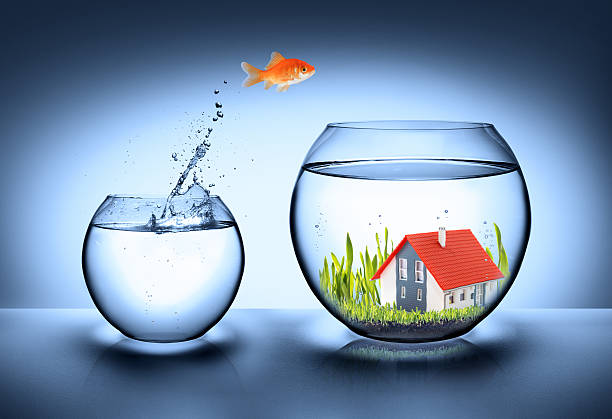fish find house goldfish jump in fishbowl with house - real estate concept buy single word stock pictures, royalty-free photos & images