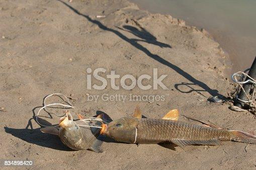 istock fish fishing 834898420