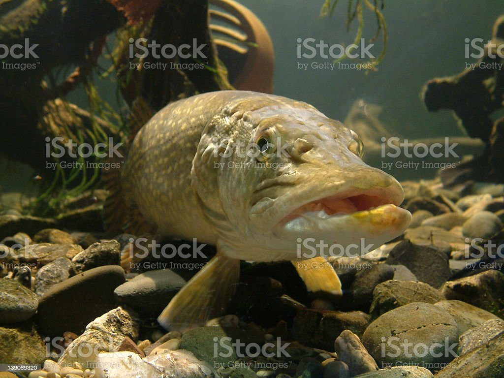 Fish Fishy Fish! stock photo