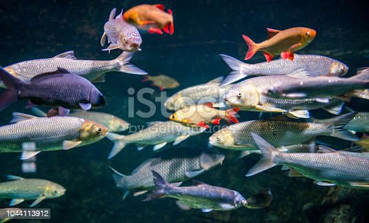 Underwater nature and life, living organisms in a fish tank. Indoors shooting