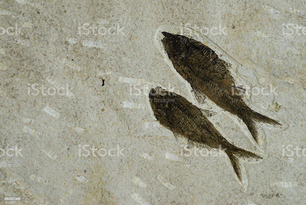 Ryba Fossils zbiór zdjęć royalty-free