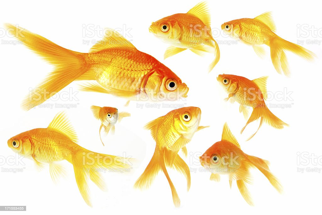 Fish Group royalty-free stock photo