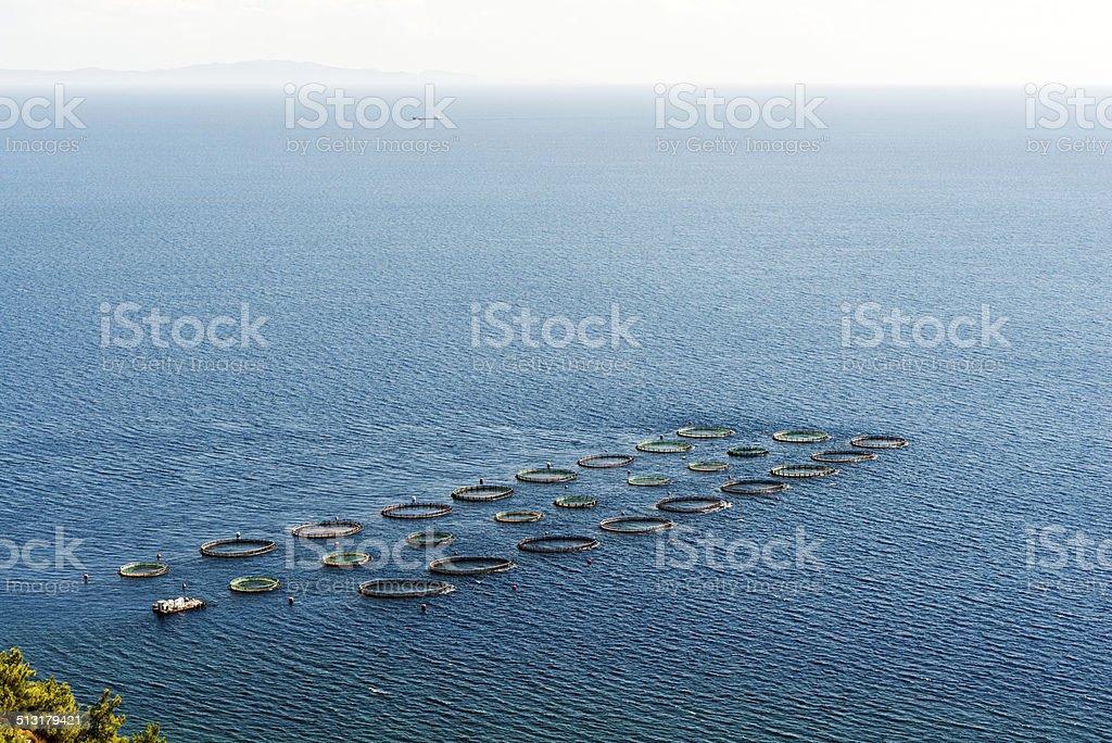 Fish Hatchery stock photo