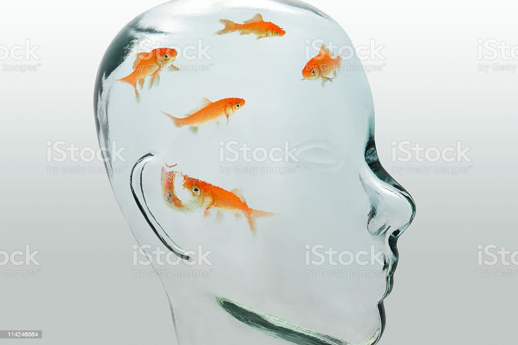 Fish head (XXL) stock photo