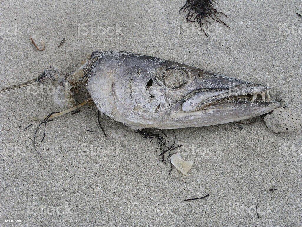 fish head royalty-free stock photo