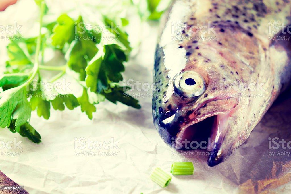 Fish head stock photo