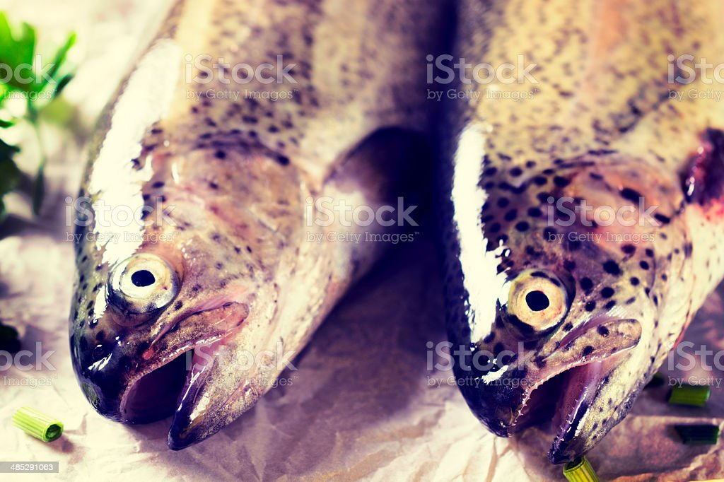 Fish heads stock photo