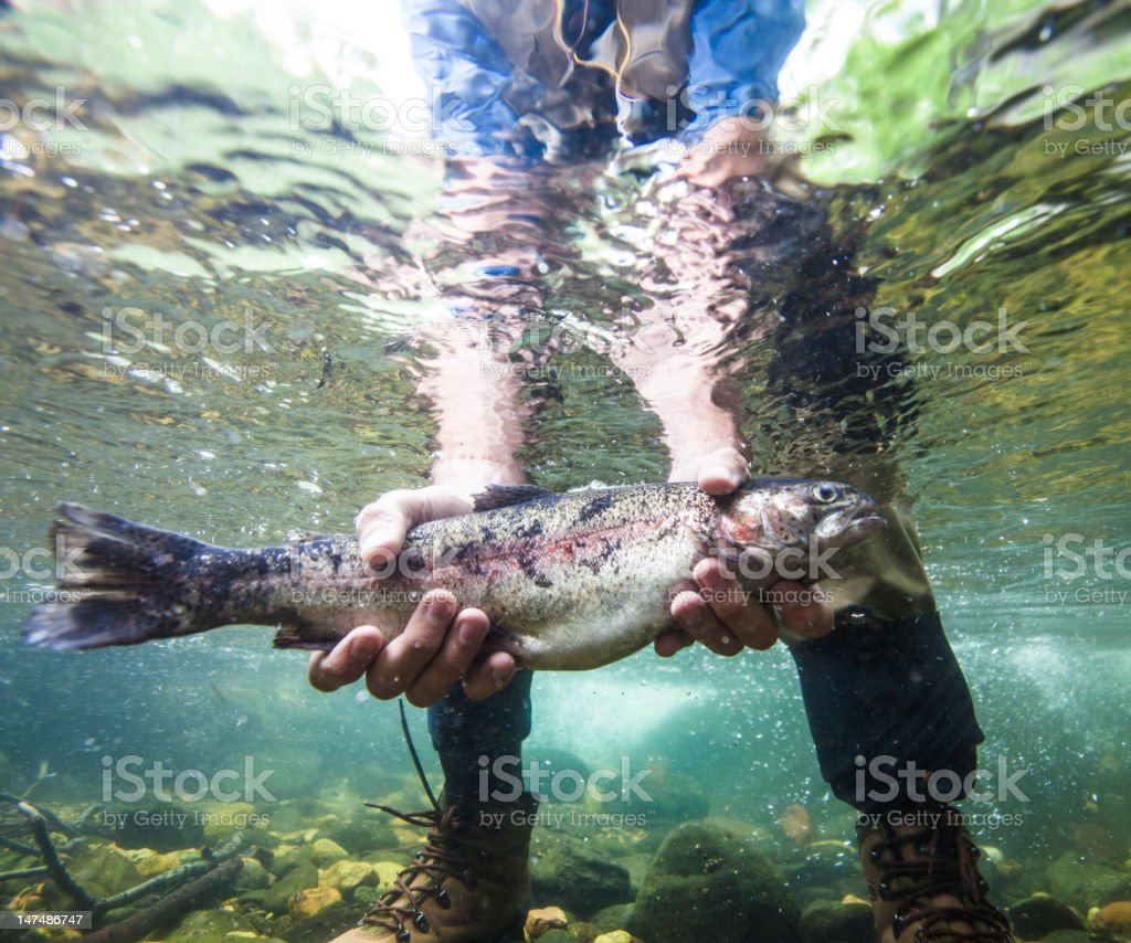 Fish Held Underwater stock photo