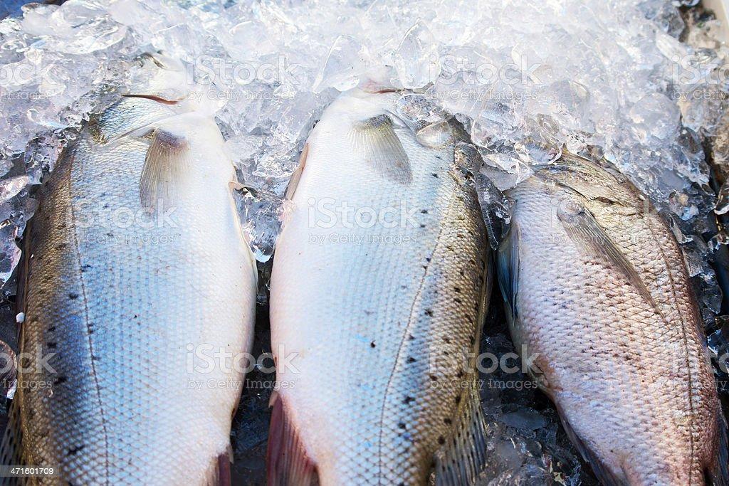 Fish ice stock photo