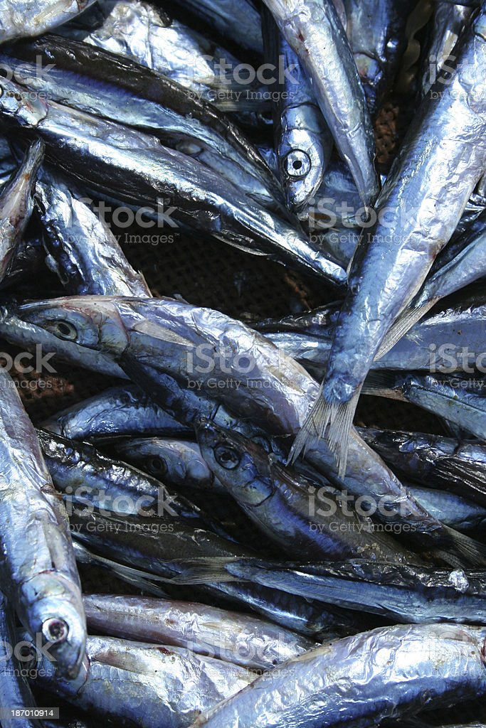 Fish in a basket royalty-free stock photo