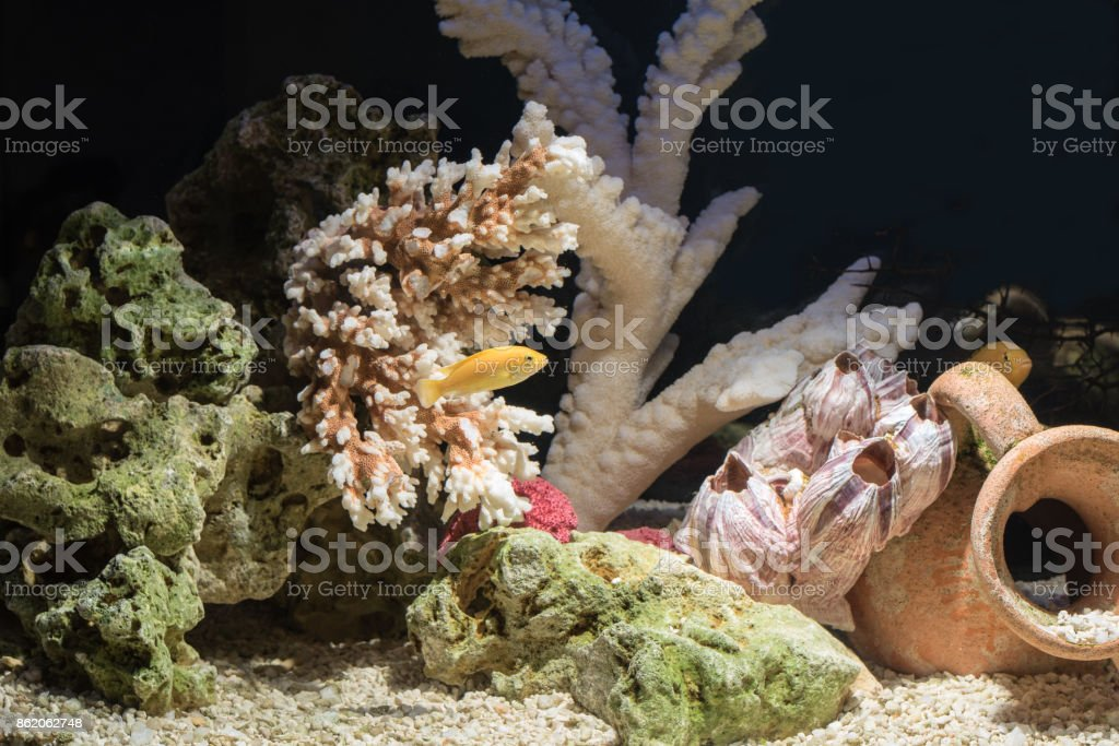 Fish in a freshwater aquarium stock photo