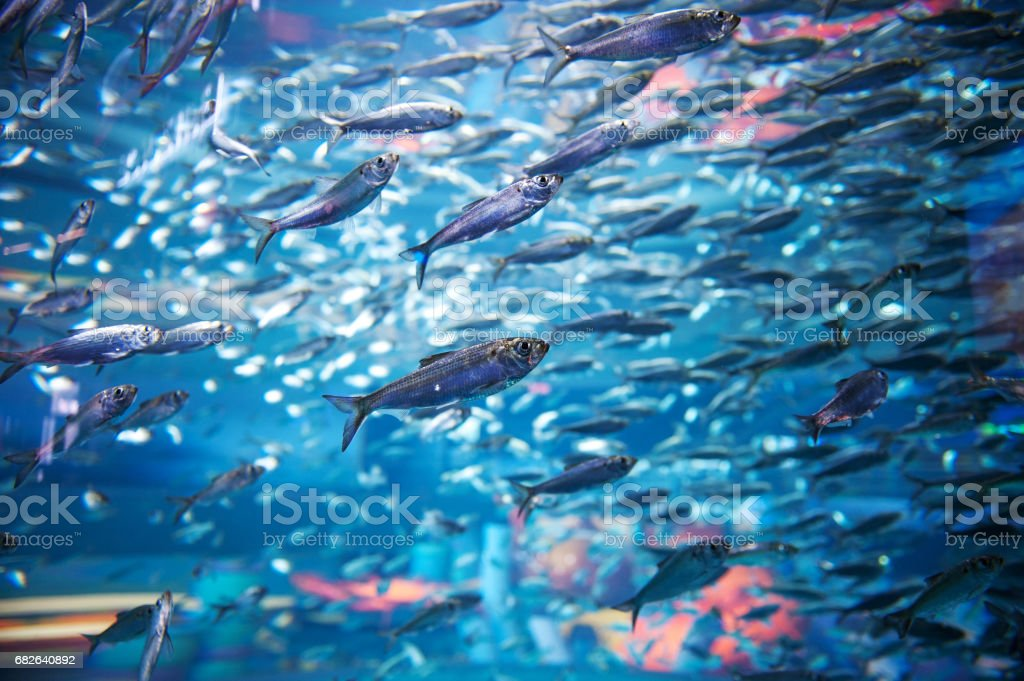 Fish in an Aquarium – Foto