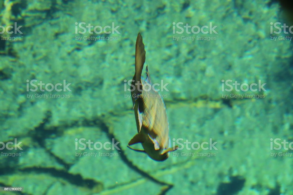 Fish in an aquarium stock photo