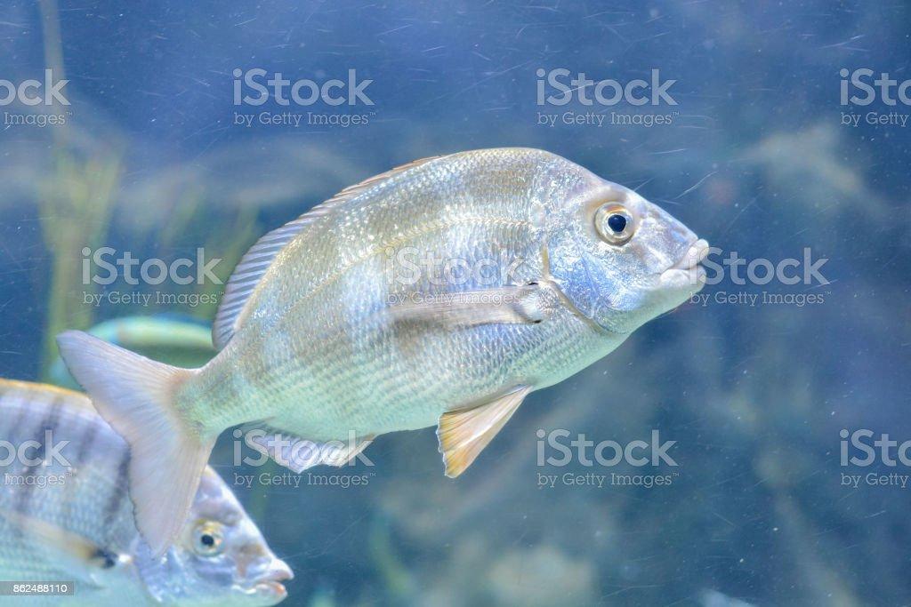 Fish in Aquarium stock photo