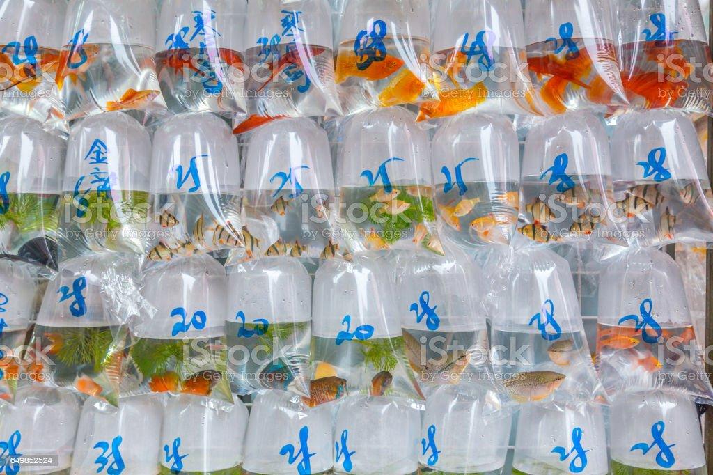 Fish in bags at the fish market in Mongkok Hong Kong stock photo