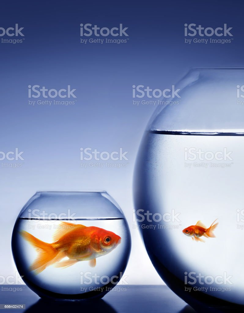 Fish in bowl stock photo