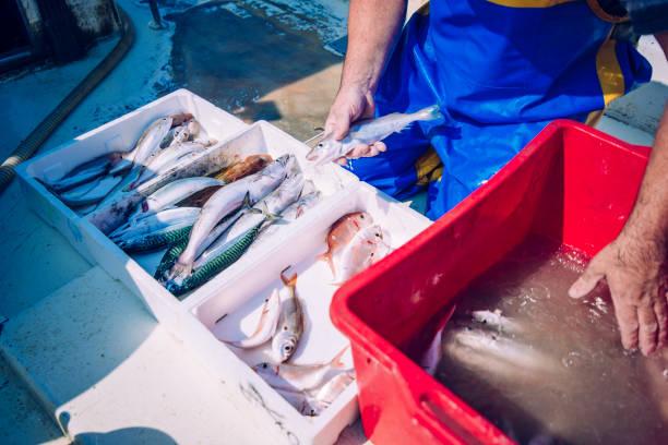 fisch in boxen - segelhandschuhe stock-fotos und bilder