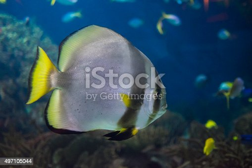 Coral reef fish in swimming freely.