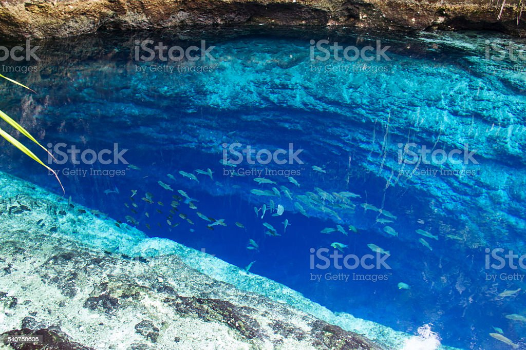 Fish in cristal clean water of enchanted river Philippines stock photo