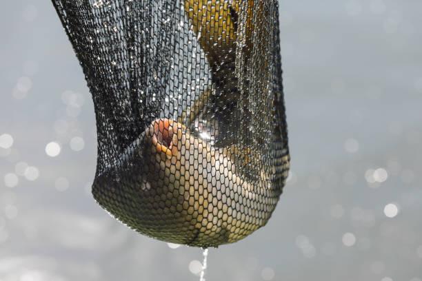 Fische im Landenetz, die gerade aus dem Wasser geholt wurden – Foto