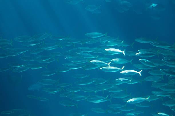 fish in oceanarium in blue depth water – Foto