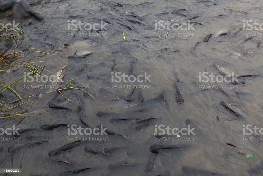 fish in river stock photo