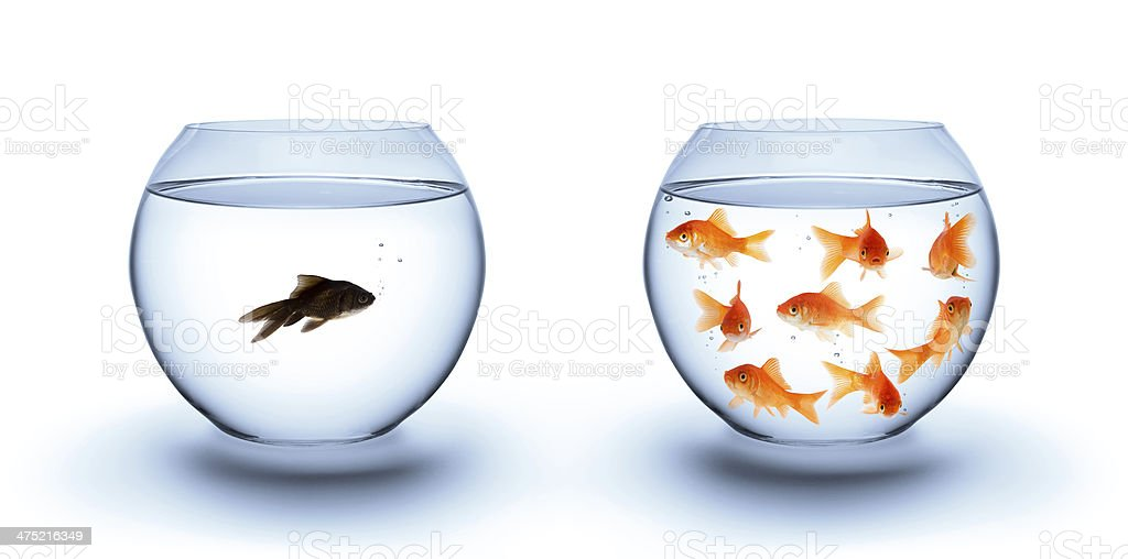 fish in solitude stock photo