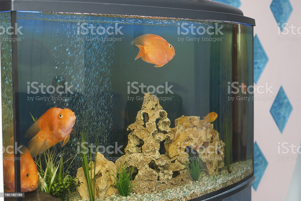 fish in the aquarium stock photo