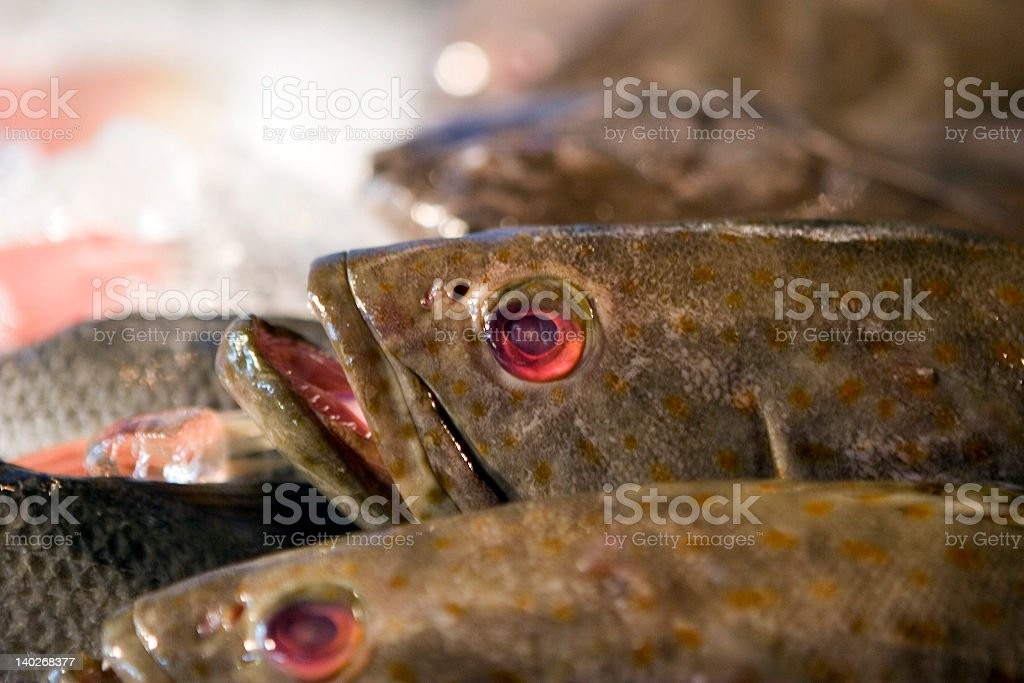 Fish in the Market royalty-free stock photo