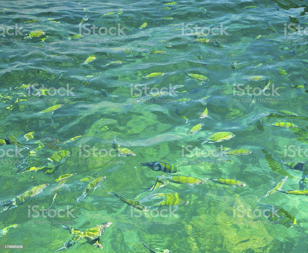 Fish in the sea  thailand royalty-free stock photo