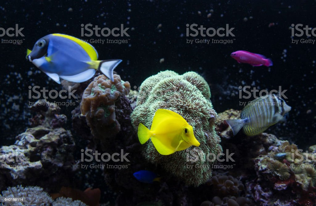 Fish in the water stock photo