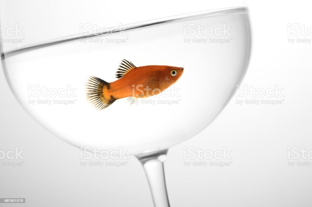 Fish in wineglass stock photo