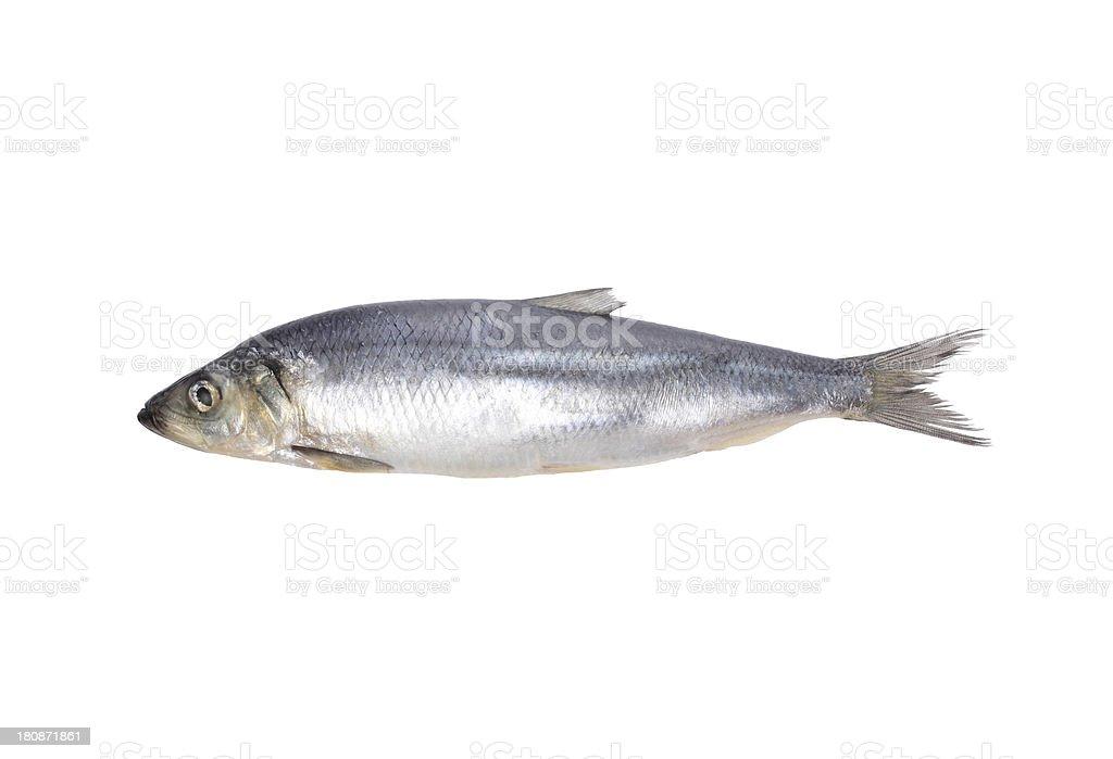 fish isolated on white stock photo