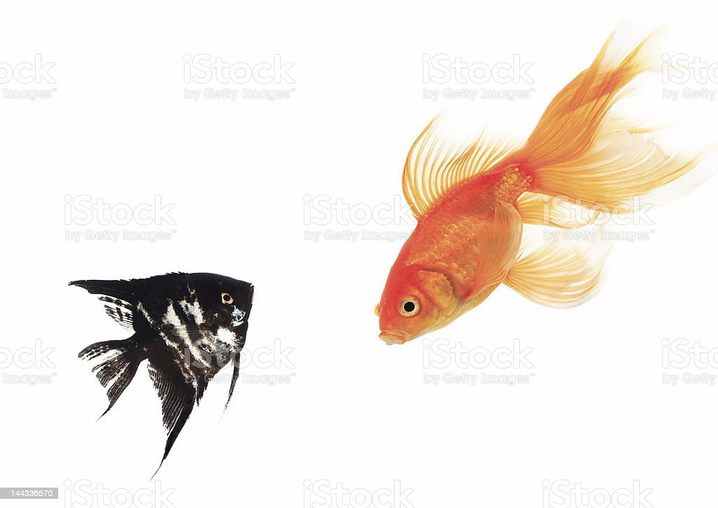 fish isolated royalty-free stock photo
