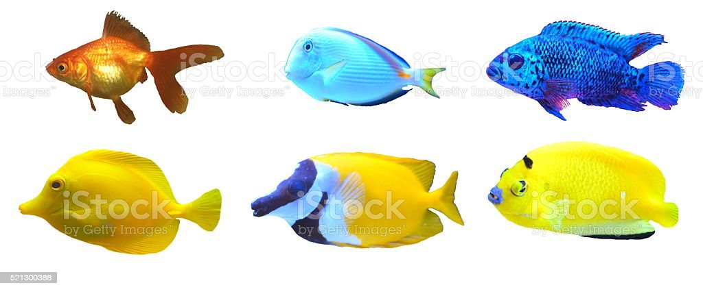 fish isolated stock photo