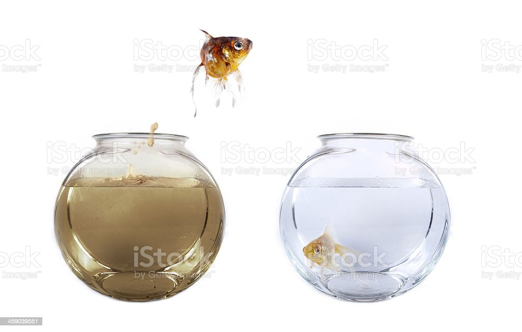 Fish jumping from his polluted bowl into a clean fishbowl stock photo