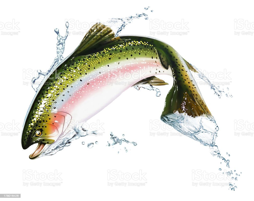 Fish jumping out of the water, with some splashes. stock photo